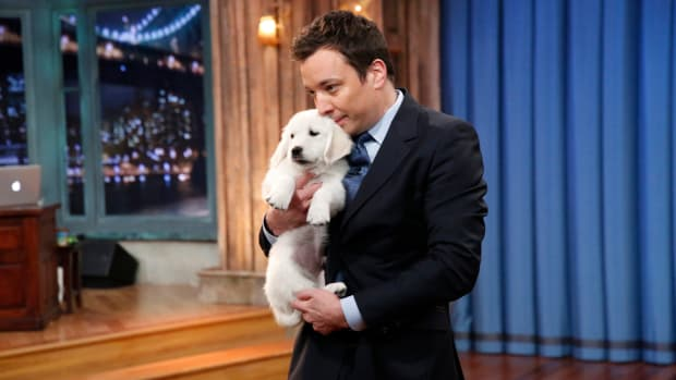 super-bowl-puppy-predictions-jimmy-fallon.jpg
