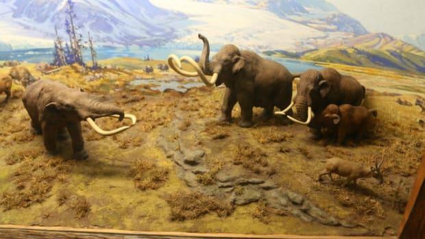 orgeon-state-mammoth-bones.jpg