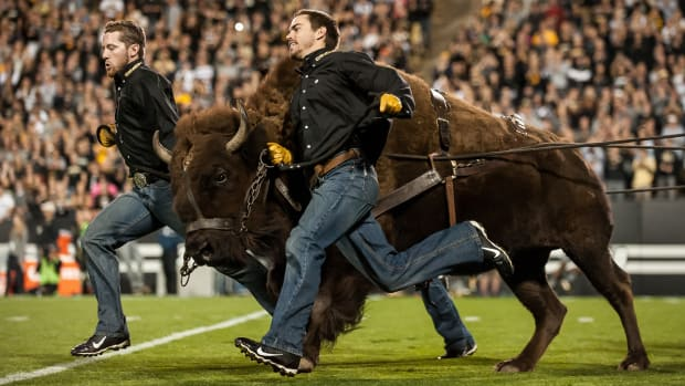 mannequin-challenge-colorado-buffaloes-mascot-ralphie-video.jpg