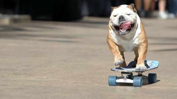 giants-dog-skateboarding.jpg