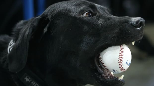 tampa-bay-rays-max-super-dog-video.jpg