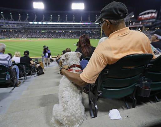 Dogs-world-record-14.jpg