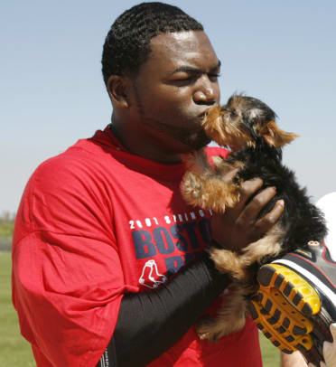 Athletes and Their Dogs - 2 - David Ortiz