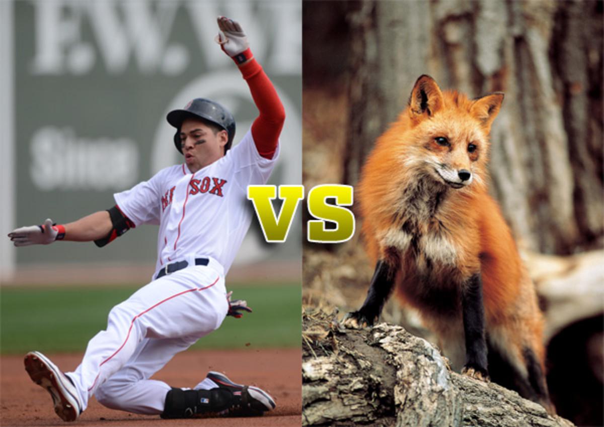 jacoby ellsbury vs red fox