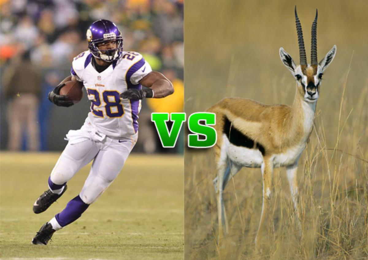 adrian peterson vs gazelle
